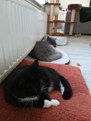 Stress verminderen bij katten door reorganisatie in het gezin. Onze 3 katten op een rij. De rust is weergekeerd.