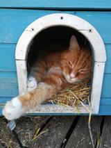 Impact lockdown op gedrag huisdieren.