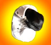 (C.S.K) Corona stress bij katten. De eerste symptomen. Teddy is een hyperactieve kat. Door corona en een gewijzigde gezinssituatie is hij nog meer gestressed.